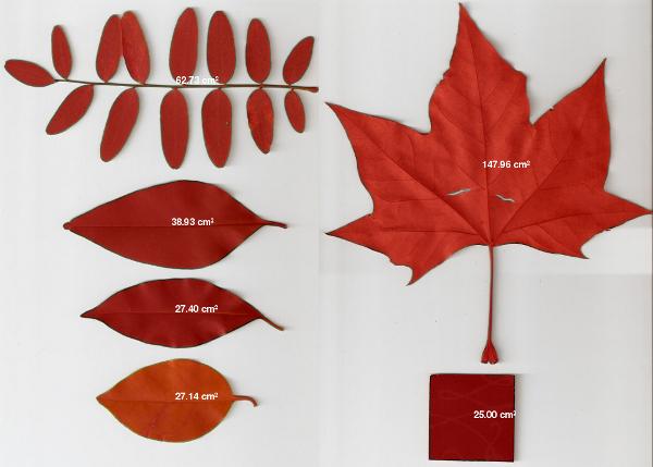 Cálculo de área foliar